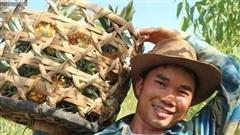 Chàng kỹ sư Nghệ An trồng loại trái 'đầu rồng, đuôi phụng, cánh tiên', tiêu thụ 2 tấn/ngày