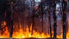 Dùng cây cối để cảnh báo cháy rừng