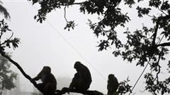 Bầy khỉ đói đe dọa 'thiên đường du lịch' Ấn Độ