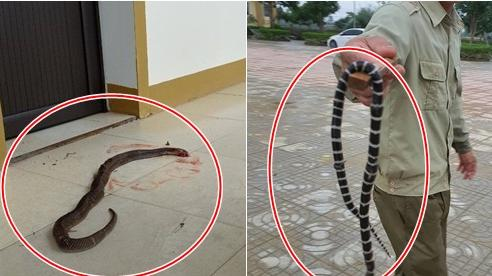 Nước lũ rút ở Hà Tĩnh: Văn phòng xuất hiện rắn độc, côn trùng bò khắp trường học