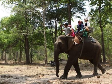Đắk Lắk dần chuyển đổi sang mô hình du lịch thân thiện với voi