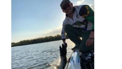 Ăn phải lưới của ngư dân, cá sấu khổng lồ toi đời
