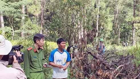 Xác định các đối tượng cưa hạ hàng loạt cây thông rừng phòng hộ