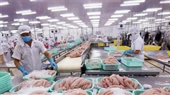 VASEP khuyến cáo doanh nghiệp không nôn nóng, hạ giá bán cá tra sang Trung Quốc