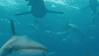 Kịch bản kinh hoàng với 500.000 con cá mập liên quan đến một số loại vắc xin Covid-19