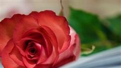 Tử vi ngày 30/11/2020: Tuổi Sửu đường trải hoa hồng, tuổi Thìn xuống dốc trầm trọng