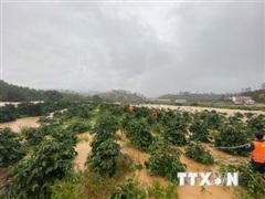 Vụ 4 du khách bị lũ cuốn trôi tại Lâm Đồng: Đã cứu được 2 người
