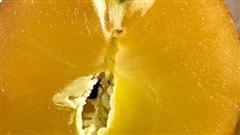 Tiết lộ về loại táo trong như mật ong, nhà giàu đổ tiền tỷ mua ăn