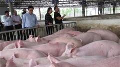 Giá lợn hơi hôm nay 30/11: Thu mua trong khoảng 66.000 - 72.000 đồng/kg