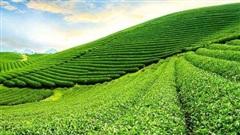 Khu đô thị sinh thái Mộc Châu gần 3.400 tỷ đồng có khả năng về tay liên danh Hancorp