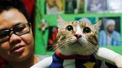 Thầy giáo bỏ nghề mở tiệm may quần áo mèo, ngày ế ẩm nhất vẫn thu tiền triệu