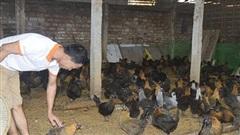 Điện Biên: Công tác giảm nghèo triển khai sâu rộng và đạt được kết quả tích cực