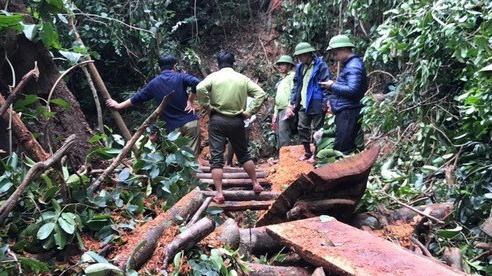 Hơn 100 chiến sỹ vây bắt nhóm đối tượng phá rừng quy mô lớn tại Quảng Bình
