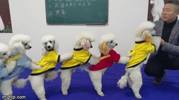 Video: Kỳ lạ ngôi trường dạy chó biết nhảy dây, giải phương trình toán học