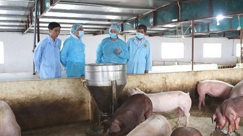 Giá lợn hơi hôm nay 10/12: Thu mua trong khoảng 65.000 - 71.000 đồng/kg