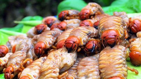 Hốt tiền nhờ đào loại côn trùng trước dùng cho gà ăn giờ lại trở thành 'thần dược' cho đàn ông