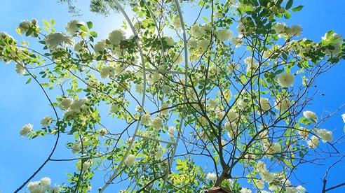 Khu vườn trăm hoa đua nở chỉ có mùa xuân ở lại của mẹ Việt ở Anh
