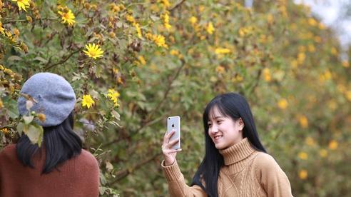 Đường hoa dã quỳ ở Quảng Trị thu hút giới trẻ