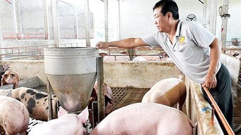 Giá lợn hơi hôm nay 21/12: Thu mua trong khoảng 67.000 - 74.000 đồng/kg
