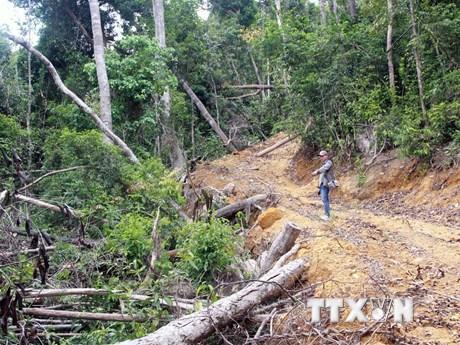Phú Yên: Khởi tố thêm các đối tượng mở đường để phá rừng giáp ranh