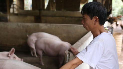 Sở Công thương xác định có sự thiếu hụt nguồn cung thịt lợn trong dịp Tết Nguyên đán Tân Sửu 2021?