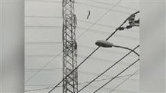 TPHCM: Người đàn ông bất ngờ nhảy xuống từ cột điện cao thế