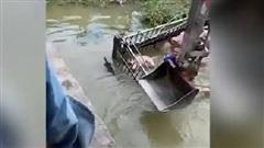 Xe tải lao xuống sông, tài xế vật lộn cùng 40 con lợn bì bõm dưới nước