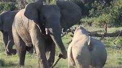 Kinh hoàng đại chiến 'máu lửa' giữa voi và tê giác