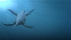Thủy quái đáng sợ nhất thời tiền sử, có lực cắn mạnh gấp 4 lần khủng long bạo chúa