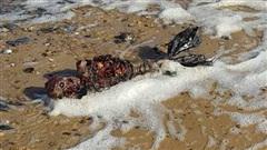 Kinh hãi khi nhìn thấy xác 'thủy quái' hình dạng nửa người nửa cá