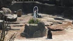 Chàng cánh cụt si tình, phải lòng nhân vật hoạt hình sau khi bị vợ bỏ rơi