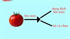 Giải cứu môi trường bằng cà chua lên men