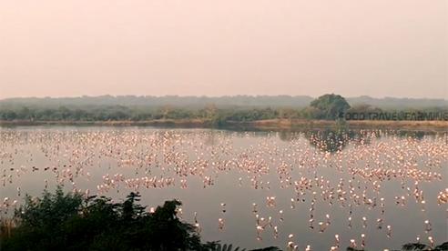 """Ngoạn mục hàng nghìn hồng hạc đổ bộ """"nhuộm"""" hồng Navi Mumbai"""