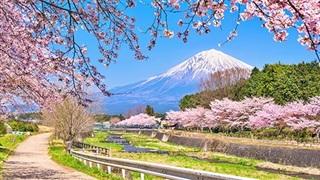 Đừng bỏ qua những món ăn này nếu đến Nhật mùa hoa anh đào nở