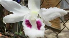 ĐỪNG LỠ ngày 10/7: Sốc với giá thực trên trăm tỷ của giống hoa lan của chủ nhân ở Hà Nội; Khai tử dịch vụ đòi nợ từ 1/1/2021