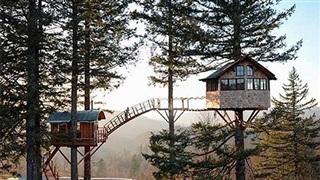 Top 8 ngôi nhà trên cây ai cũng muốn đến ở một lần