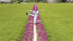Ngắm nhìn con đường hoa mười giờ 'đẹp nhất' Miền Tây