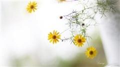 Ca khúc ngày mới: Tháng 8 sang, sắc thu vàng