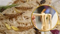 Lạ lùng món mỳ Ramen côn trùng khiến thực khách thích mê