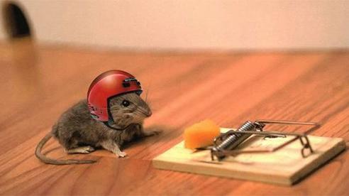 Kĩ năng bẫy chuột không tốn nhiều mồ hôi