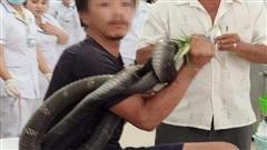 Vụ bị rắn hổ mang chúa cắn, người đàn ông ôm 'thủ phạm' dài 3m tới bệnh viện: Lời chia sẻ đẫm nước mắt của chị gái