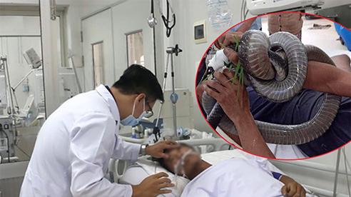 Nọc độc rắn hổ mang chúa 4,6kg ở núi Bà Đen 'biến mất' khỏi người nạn nhân cách nào?
