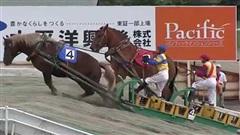 Cuộc đua ngựa… chậm nhất thế giới