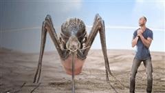 Vì sao muỗi hay đốt người mặc đồ sáng màu?