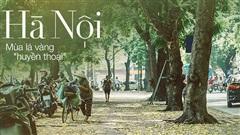 Con đường cây 'huyền thoại' ở Hà Nội lại phủ đầy lá vàng rồi, phải chăng là mùa thu sắp về?