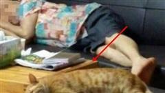 Gửi mèo cưng nhờ mẹ chăm hộ để đi công tác nửa tháng, cô gái trở về liền ngỡ ngàng với diện mạo của con vật đến nỗi không nhận ra