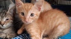 Chàng trai đem 3 con mèo về nuôi, 3 năm sau ai cũng bất ngờ khi bước vào căn nhà của anh