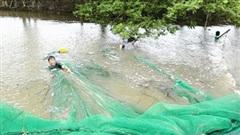 Mướt mắt cảnh người dân Đồng Tháp kéo cá linh mùa lũ