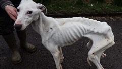 Tìm thấy con vật gầy chỉ còn da bọc xương đứng không vững, cảnh sát lập tức điều tra, phát hiện việc làm tàn độc của người chủ