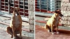Không biết chủ nhân qua đời, nàng chó trung thành ngồi đợi suốt một tuần ngoài hiệu sách